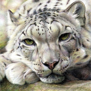 Snow Leopard, Nick Day